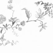 Dandino Aromas 620-4